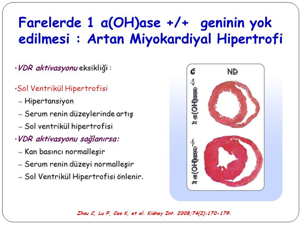 Farelerde 1 α(OH)ase +/+ geninin yok edilmesi : Artan Miyokardiyal Hipertrofi eksikliği VDR aktivasyonu eksikliği : Sol Ventrikül Hipertrofisi – Hiper