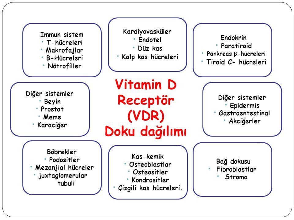 Vitamin D Receptör (VDR) Doku dağılımı Immun sistem T-hücreleri Makrofajlar B-Hücreleri Nötrofiller Kas-kemik Osteoblastlar Osteositler Kondrositler Ç