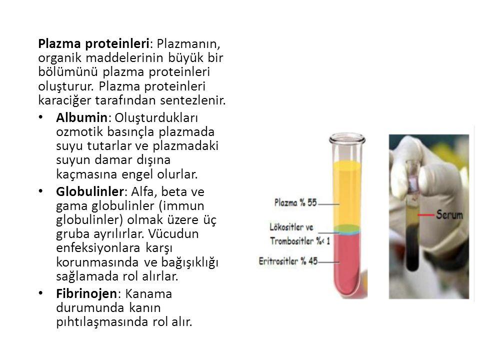 Plazma proteinleri: Plazmanın, organik maddelerinin büyük bir bölümünü plazma proteinleri oluşturur.