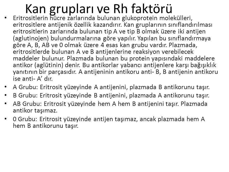 Kan grupları ve Rh faktörü Eritrositlerin hücre zarlarında bulunan glukoprotein molekülleri, eritrositlere antijenik özellik kazandırır.