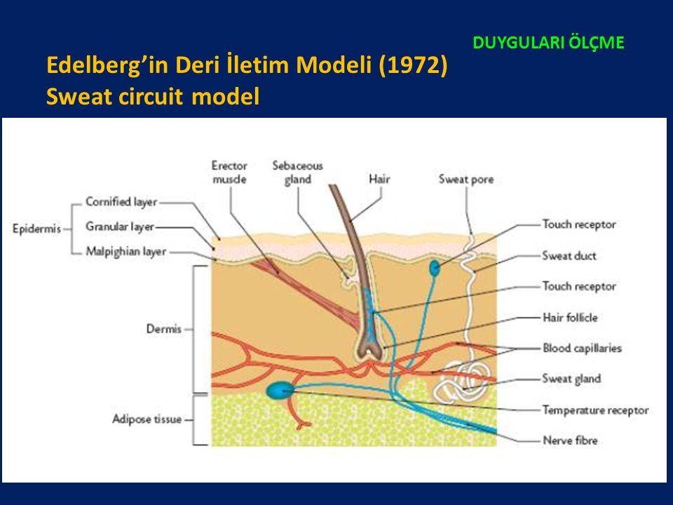 Edelberg'in Deri İletim Modeli (1972) Sweat circuit model DUYGULARI ÖLÇME