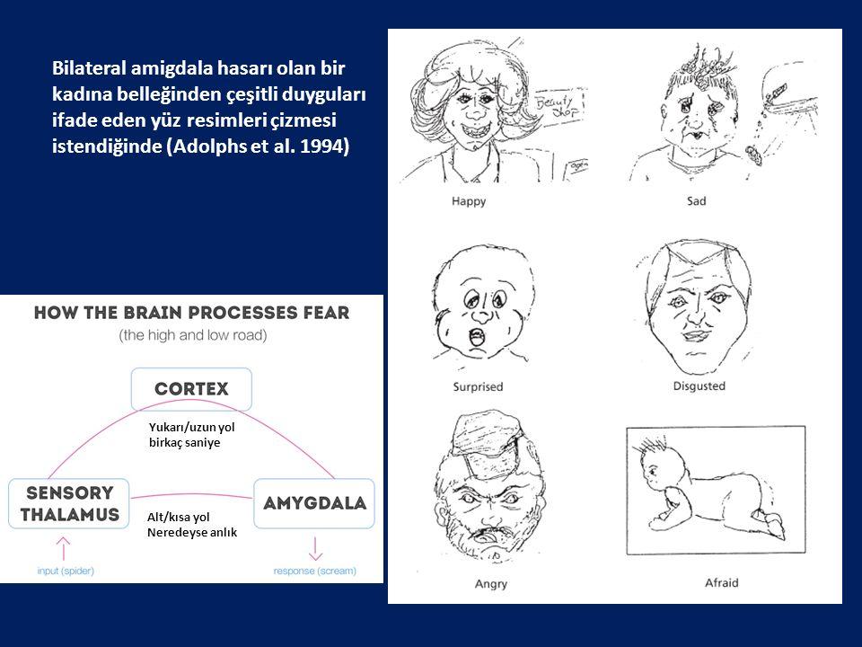 Bilateral amigdala hasarı olan bir kadına belleğinden çeşitli duyguları ifade eden yüz resimleri çizmesi istendiğinde (Adolphs et al. 1994) Yukarı/uzu
