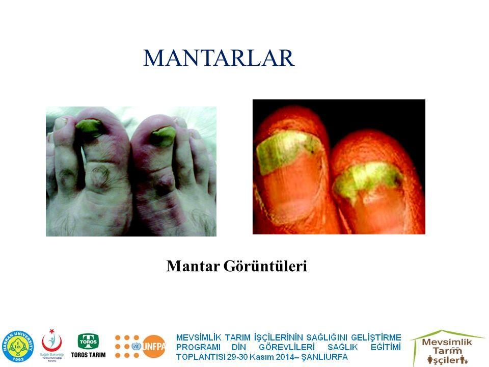 MANTARLAR Mantar Görüntüleri 52
