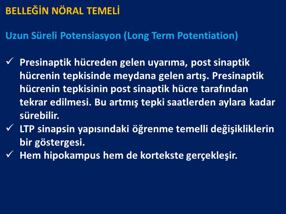 BELLEĞİN NÖRAL TEMELİ Uzun Süreli Potensiasyon (Long Term Potentiation) Presinaptik hücreden gelen uyarıma, post sinaptik hücrenin tepkisinde meydana