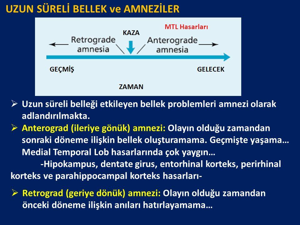 UZUN SÜRELİ BELLEK ve AMNEZİLER MTL Hasarları  Uzun süreli belleği etkileyen bellek problemleri amnezi olarak adlandırılmakta.  Anterograd (ileriye