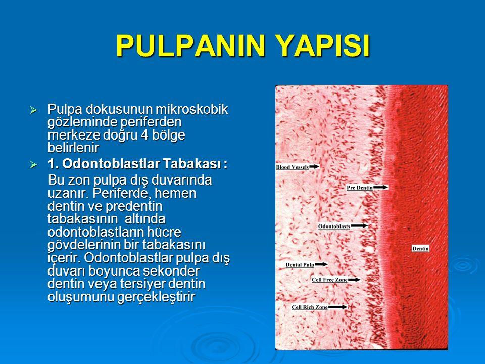 PULPANIN YAPISI  Pulpa dokusunun mikroskobik gözleminde periferden merkeze doğru 4 bölge belirlenir  1. Odontoblastlar Tabakası : Bu zon pulpa dış d