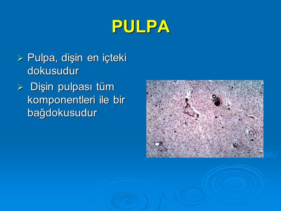 PULPA  Pulpa, dişin en içteki dokusudur  Dişin pulpası tüm komponentleri ile bir bağdokusudur