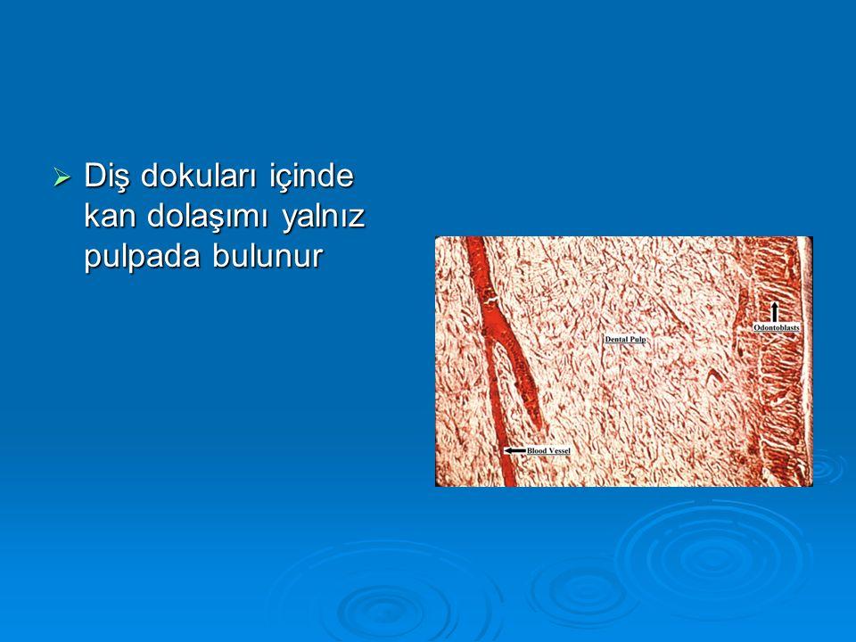  Diş dokuları içinde kan dolaşımı yalnız pulpada bulunur