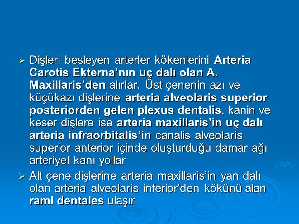  Dişleri besleyen arterler kökenlerini Arteria Carotis Ekterna'nın uç dalı olan A. Maxillaris'den alırlar. Üst çenenin azı ve küçükazı dişlerine arte
