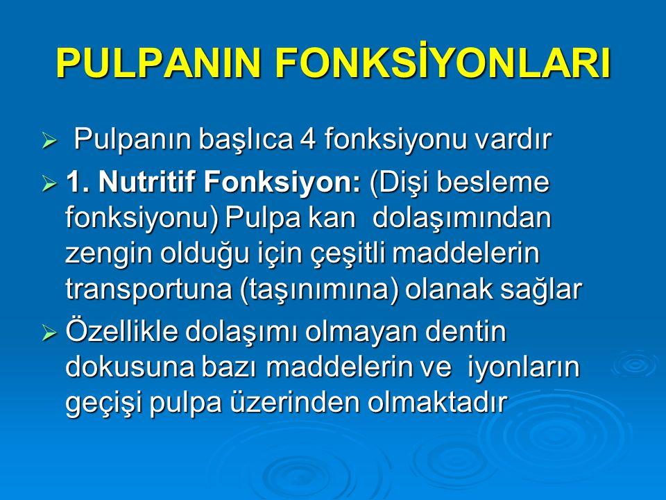 PULPANIN FONKSİYONLARI  Pulpanın başlıca 4 fonksiyonu vardır  1. Nutritif Fonksiyon: (Dişi besleme fonksiyonu) Pulpa kan dolaşımından zengin olduğu