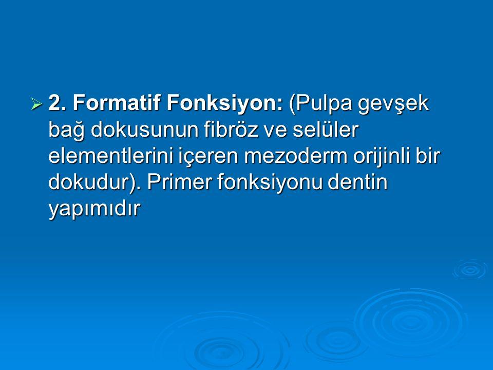  2. Formatif Fonksiyon: (Pulpa gevşek bağ dokusunun fibröz ve selüler elementlerini içeren mezoderm orijinli bir dokudur). Primer fonksiyonu dentin y