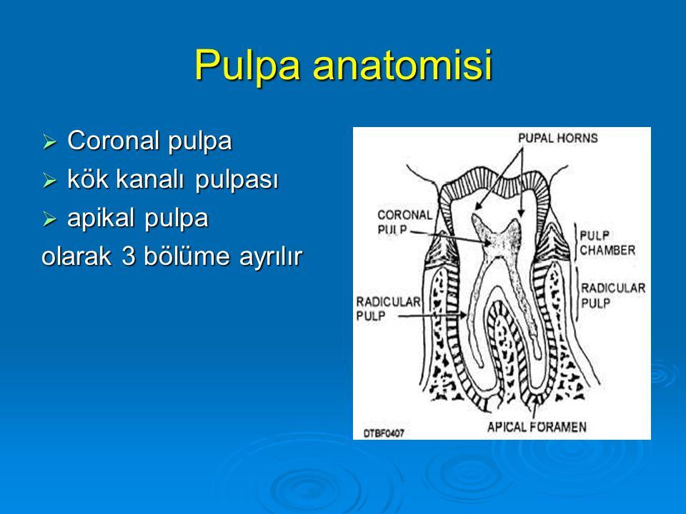 Pulpa anatomisi  Coronal pulpa  kök kanalı pulpası  apikal pulpa olarak 3 bölüme ayrılır