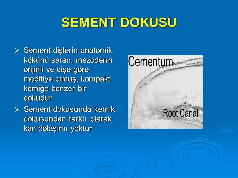 SEMENT DOKUSU  Sement dişlerin anatomik kökünü saran, mezoderm orijinli ve dişe göre modifiye olmuş, kompakt kemiğe benzer bir dokudur  Sement dokus
