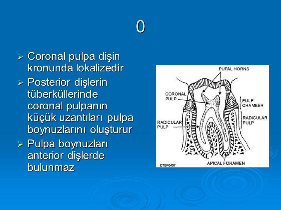 0  Coronal pulpa dişin kronunda lokalizedir  Posterior dişlerin tüberküllerinde coronal pulpanın küçük uzantıları pulpa boynuzlarını oluşturur  Pul