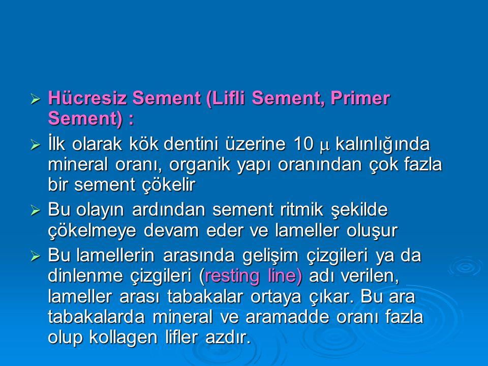  Hücresiz Sement (Lifli Sement, Primer Sement) :  İlk olarak kök dentini üzerine 10  kalınlığında mineral oranı, organik yapı oranından çok fazla b