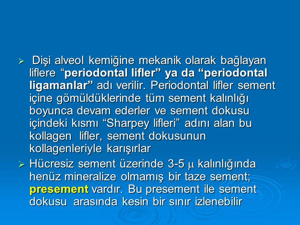 """ Dişi alveol kemiğine mekanik olarak bağlayan liflere """"periodontal lifler"""" ya da """"periodontal ligamanlar"""" adı verilir. Periodontal lifler sement için"""