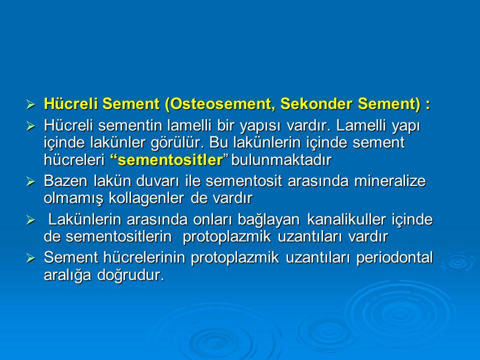  Hücreli Sement (Osteosement, Sekonder Sement) :  Hücreli sementin lamelli bir yapısı vardır. Lamelli yapı içinde lakünler görülür. Bu lakünlerin iç