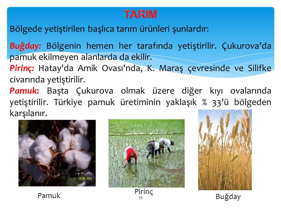 Bölgede yetiştirilen başlıca tarım ürünleri şunlardır: Buğday: Bölgenin hemen her tarafında yetiştirilir. Çukurova'da pamuk ekilmeyen alanlarda da eki