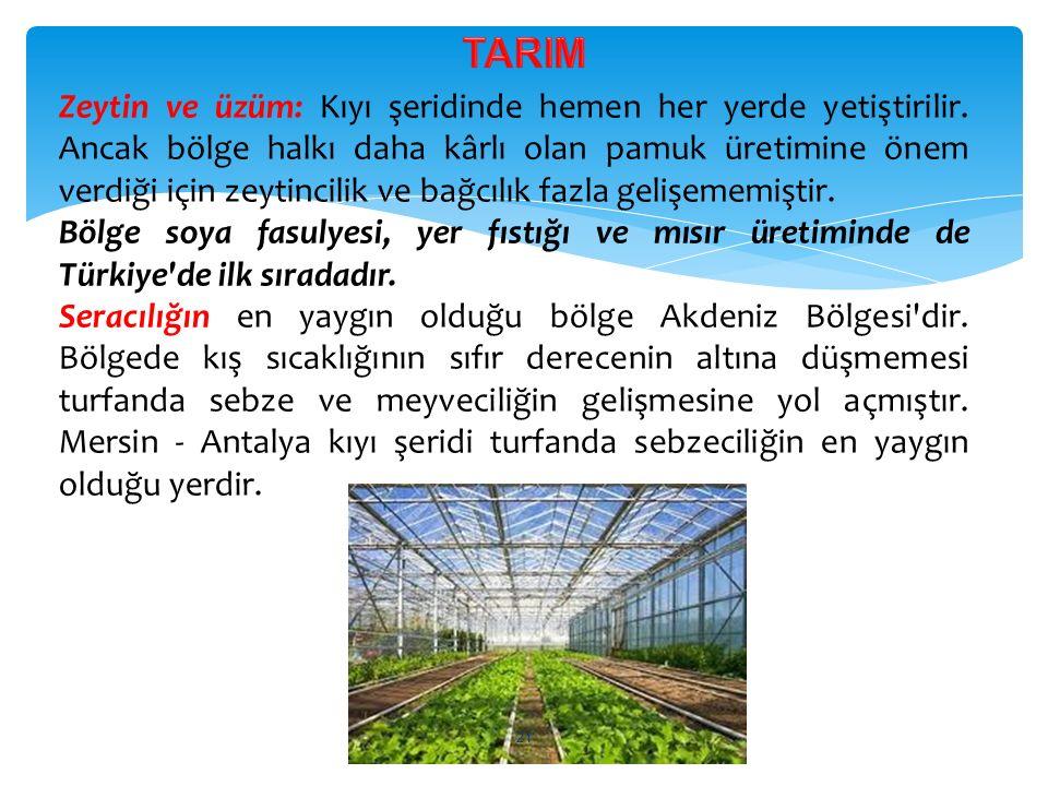 Zeytin ve üzüm: Kıyı şeridinde hemen her yerde yetiştirilir. Ancak bölge halkı daha kârlı olan pamuk üretimine önem verdiği için zeytincilik ve bağcıl