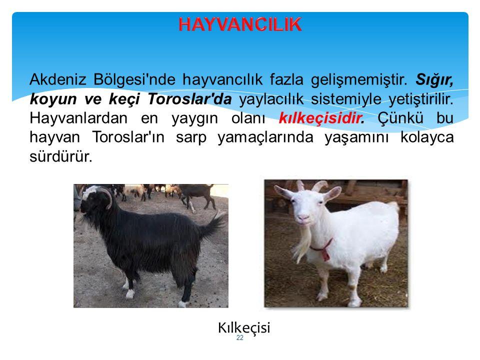Kılkeçisi Akdeniz Bölgesi'nde hayvancılık fazla gelişmemiştir. Sığır, koyun ve keçi Toroslar'da yaylacılık sistemiyle yetiştirilir. Hayvanlardan en ya