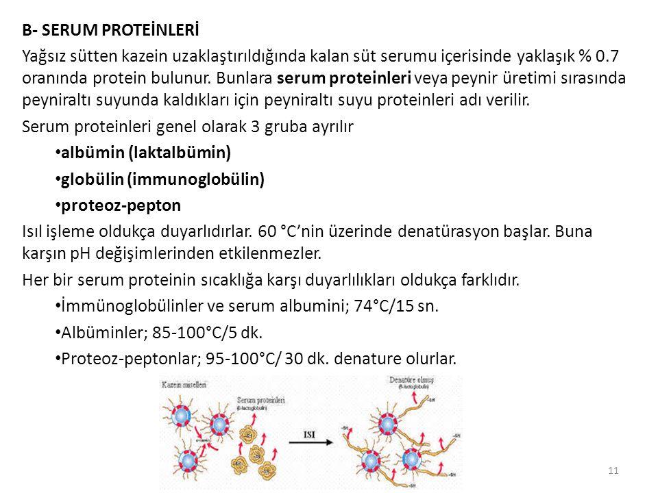 B- SERUM PROTEİNLERİ Yağsız sütten kazein uzaklaştırıldığında kalan süt serumu içerisinde yaklaşık % 0.7 oranında protein bulunur. Bunlara serum prote
