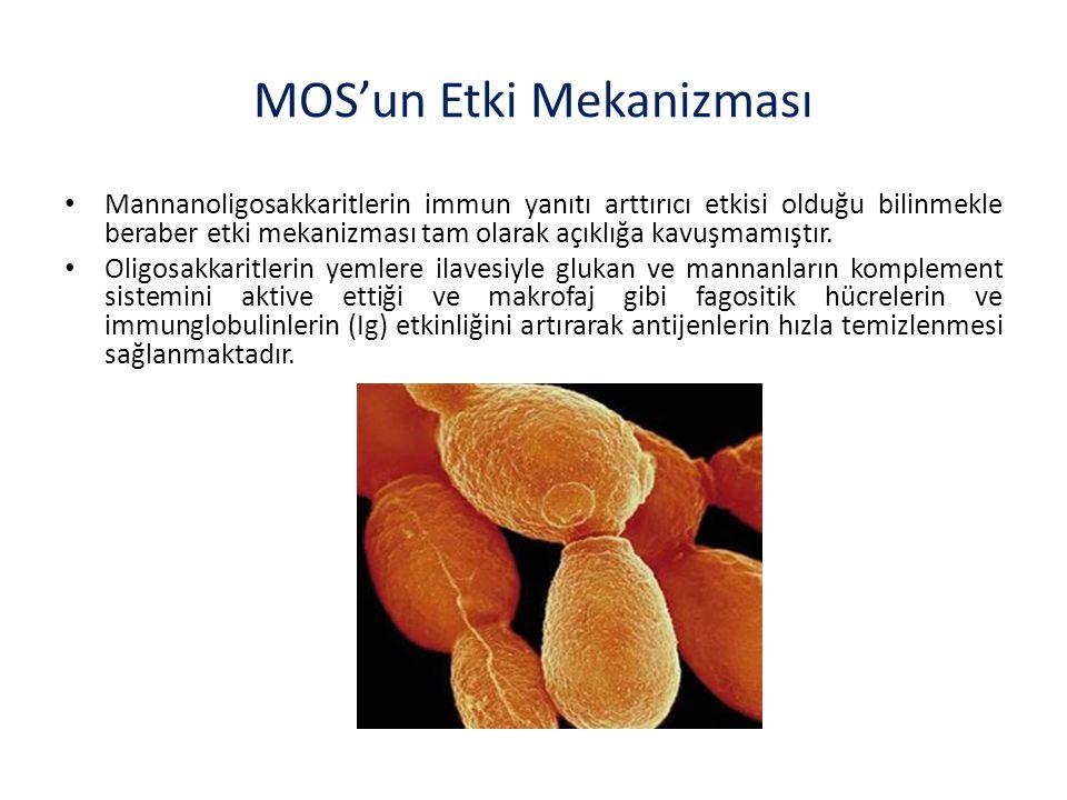 Mannanoligosakkaritlerin immun yanıtı arttırıcı etkisi olduğu bilinmekle beraber etki mekanizması tam olarak açıklığa kavuşmamıştır.