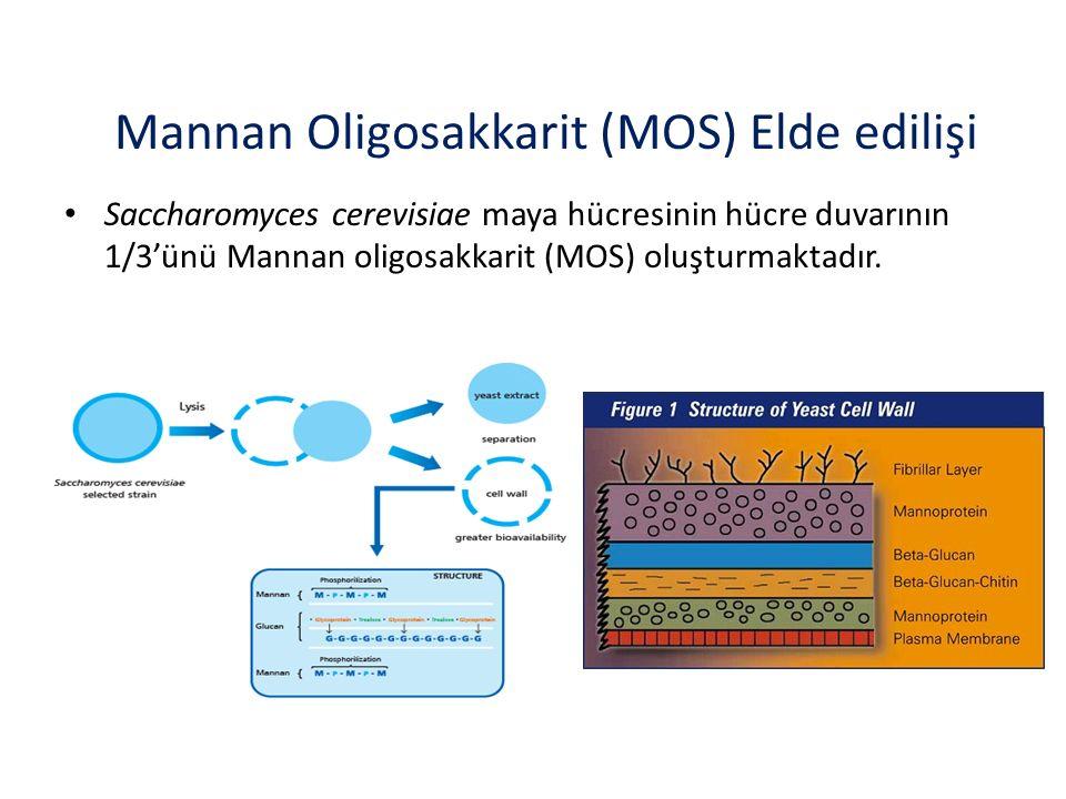 Mannan Oligosakkarit (MOS) Elde edilişi Saccharomyces cerevisiae maya hücresinin hücre duvarının 1/3'ünü Mannan oligosakkarit (MOS) oluşturmaktadır.