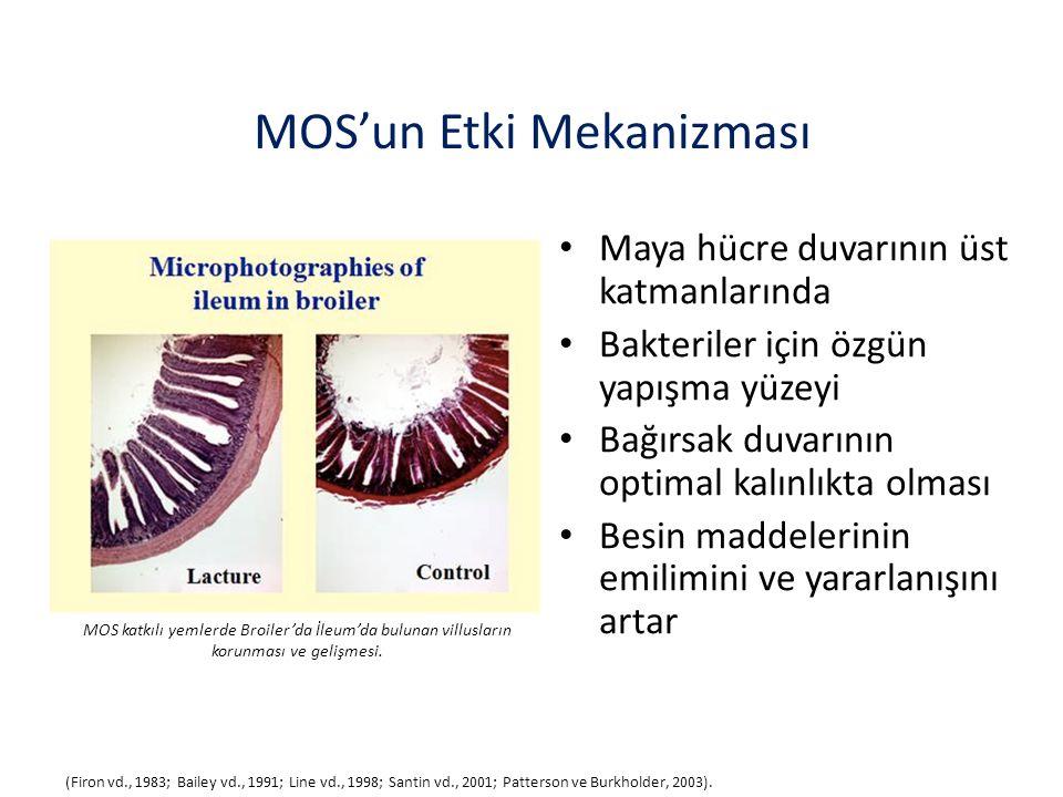 MOS'un Etki Mekanizması Maya hücre duvarının üst katmanlarında Bakteriler için özgün yapışma yüzeyi Bağırsak duvarının optimal kalınlıkta olması Besin maddelerinin emilimini ve yararlanışını artar (Firon vd., 1983; Bailey vd., 1991; Line vd., 1998; Santin vd., 2001; Patterson ve Burkholder, 2003).