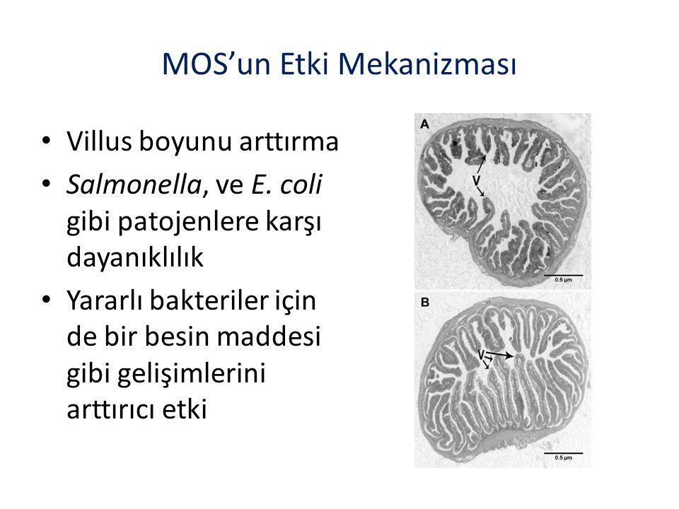 Villus boyunu arttırma Salmonella, ve E.