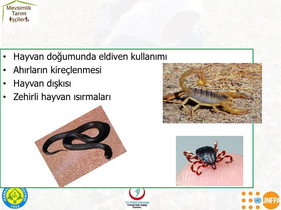 Hayvan doğumunda eldiven kullanımı Ahırların kireçlenmesi Hayvan dışkısı Zehirli hayvan ısırmaları