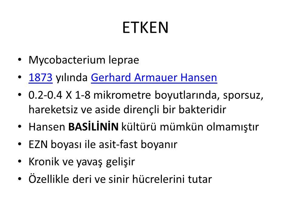 ETKEN Mycobacterium leprae 1873 yılında Gerhard Armauer Hansen 1873Gerhard Armauer Hansen 0.2-0.4 X 1-8 mikrometre boyutlarında, sporsuz, hareketsiz v