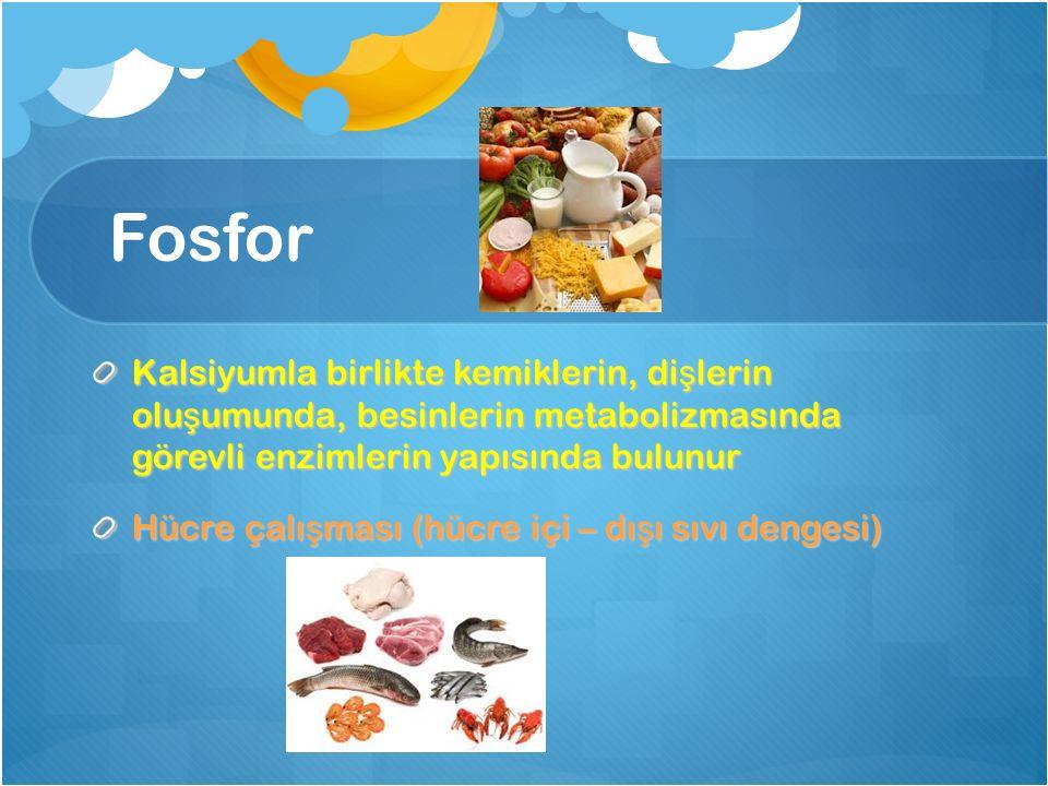 Fosfor Kalsiyumla birlikte kemiklerin, di ş lerin olu ş umunda, besinlerin metabolizmasında görevli enzimlerin yapısında bulunur Hücre çalı ş ması (hü