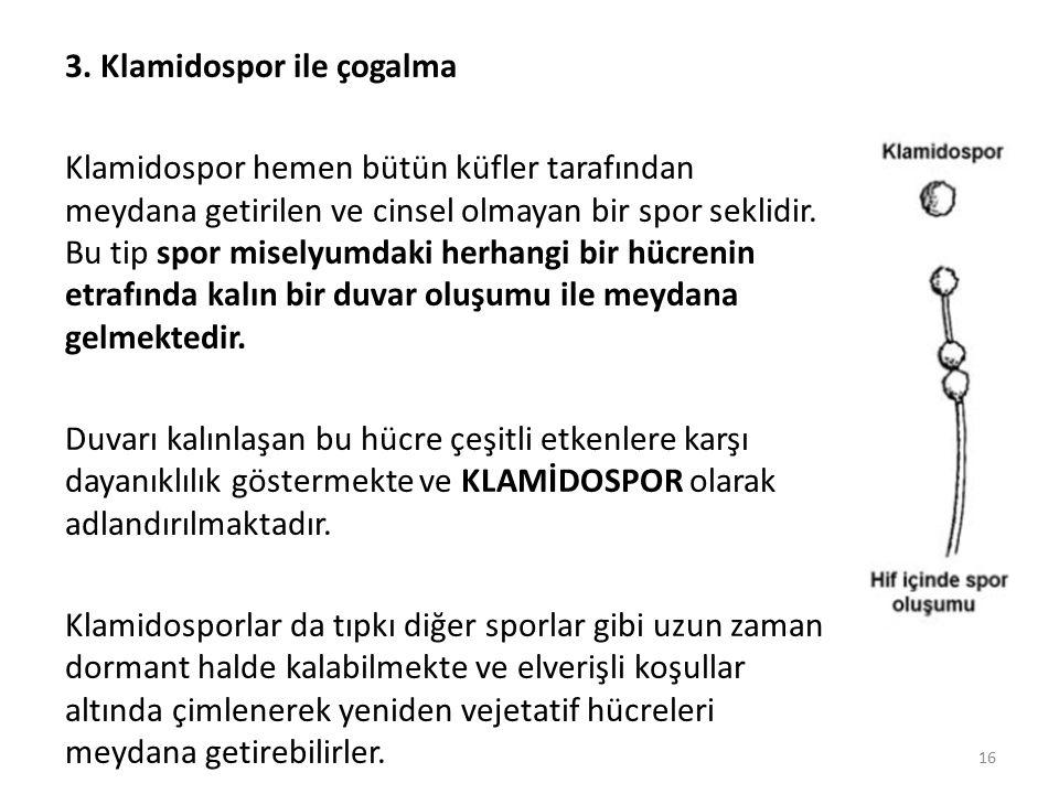 3. Klamidospor ile çogalma Klamidospor hemen bütün küfler tarafından meydana getirilen ve cinsel olmayan bir spor seklidir. Bu tip spor miselyumdaki h