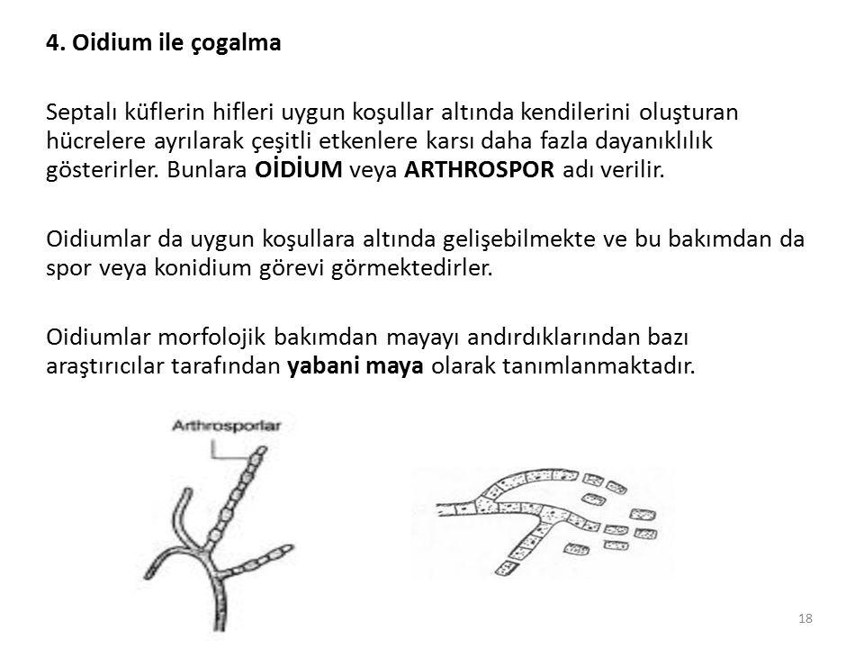 4. Oidium ile çogalma Septalı küflerin hifleri uygun koşullar altında kendilerini oluşturan hücrelere ayrılarak çeşitli etkenlere karsı daha fazla day