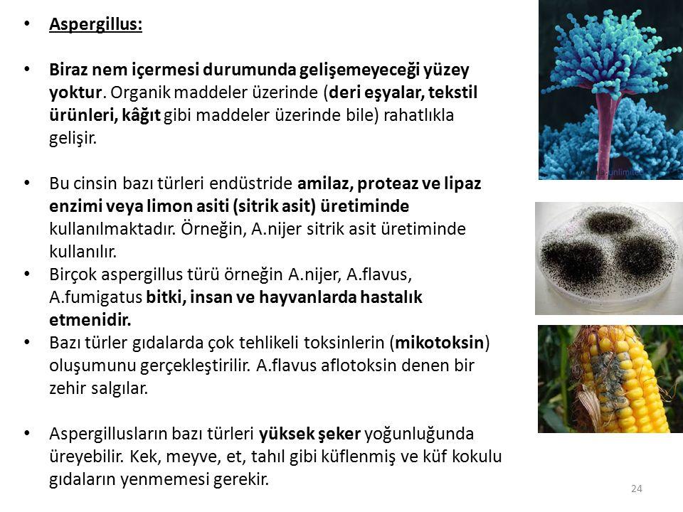 Aspergillus: Biraz nem içermesi durumunda gelişemeyeceği yüzey yoktur. Organik maddeler üzerinde (deri eşyalar, tekstil ürünleri, kâğıt gibi maddeler