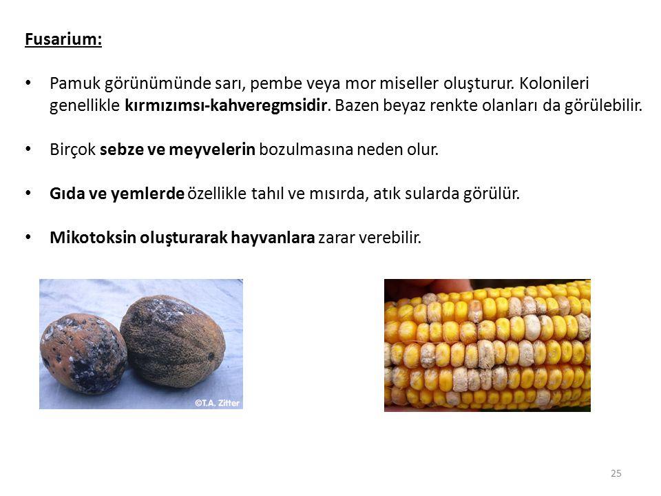 Fusarium: Pamuk görünümünde sarı, pembe veya mor miseller oluşturur. Kolonileri genellikle kırmızımsı-kahveregmsidir. Bazen beyaz renkte olanları da g