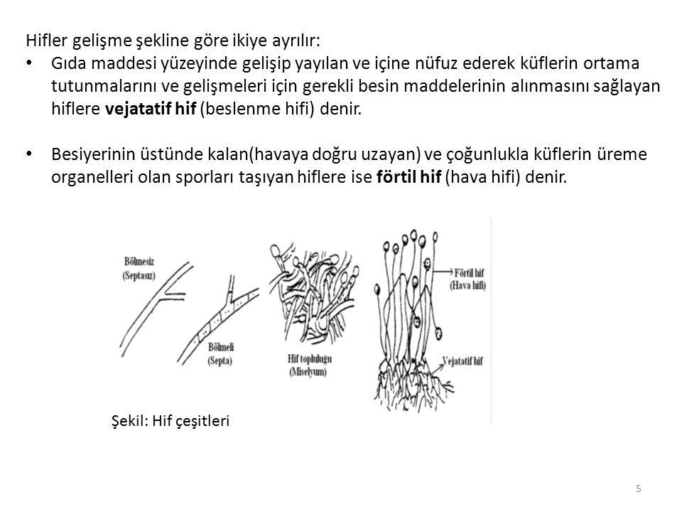 Hücrelerin uç uca gelerek oluşturdukları hif, hücrelerin birbirine temas ettiği yerlerde eğer hücre zarları erimemiş ve hücreler bu zarlarla ayrılmışsa buna bölmeli (septa) hif, ayrılmamış ve düz bir boru şeklini almışsa buna da bölmesiz (septasız) hif denir.