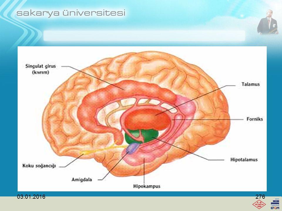 03.01.2016275 Beynin öğrenmesinde limbik sistem önemlidir.
