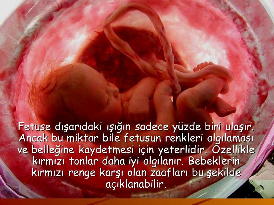 Sesten farklı olarak uterus (rahim) ışığı geçirme konusunda güçlü bir engel görevi görür ve bu şekilde bebeğin ışıktan etkilenmesi engellenir. Anne ka