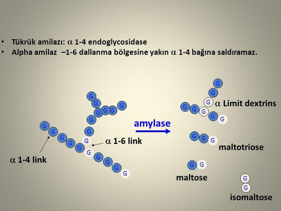 Tükrük amilazı:  1-4 endoglycosidase Alpha amilaz –1-6 dallanma bölgesine yakın  1-4 bağına saldıramaz. G G G G G G G G  1-4 link G G G G  1-6 li