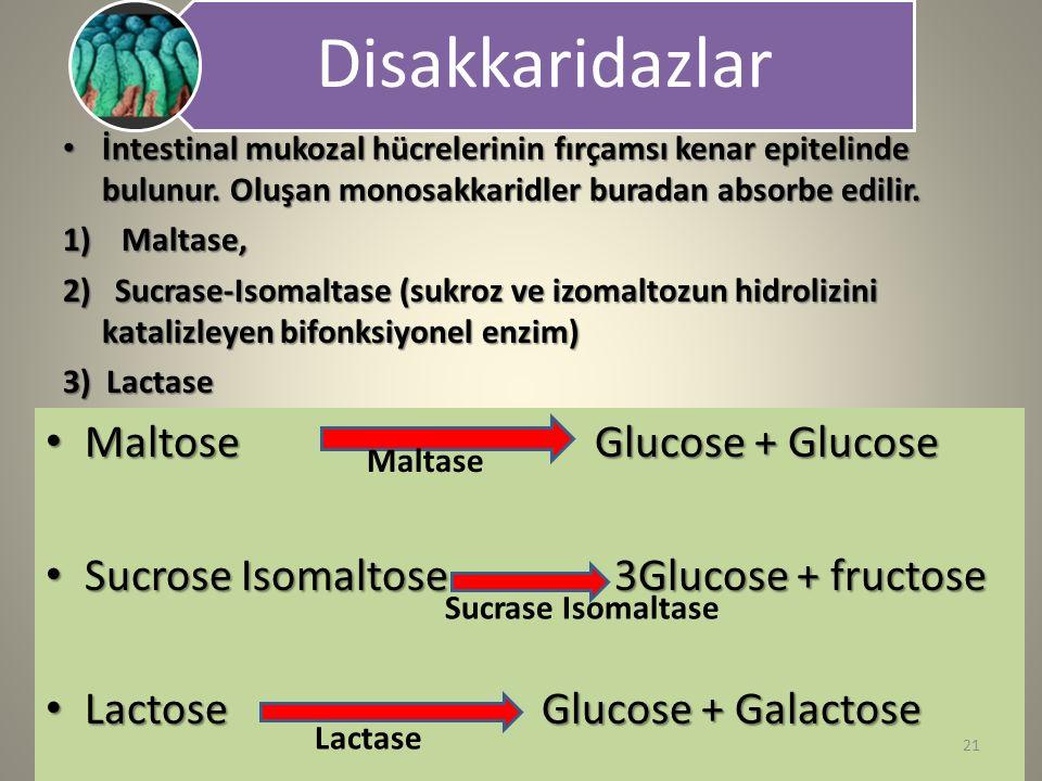 Disakkaridazlar İntestinal mukozal hücrelerinin fırçamsı kenar epitelinde bulunur. Oluşan monosakkaridler buradan absorbe edilir. İntestinal mukozal h