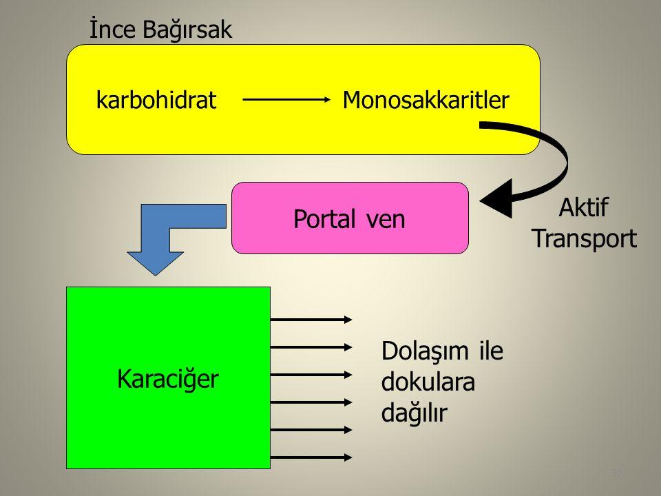 karbohidrat Monosakkaritler İnce Bağırsak Aktif Transport Karaciğer Portal ven Dolaşım ile dokulara dağılır 30