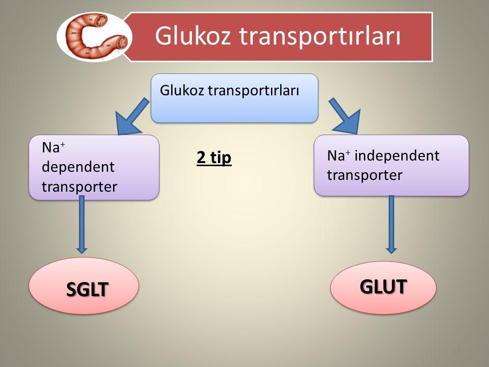 Glukoz transportırları Na + dependent transporter Na + independent transporter 2 tip SGLT GLUT 33