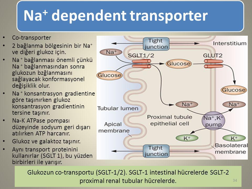 Na + dependent transporter Glukozun co-transportu (SGLT-1/2). SGLT-1 intestinal hücrelerde SGLT-2 proximal renal tubular hücrelerde. Co-transporter 2
