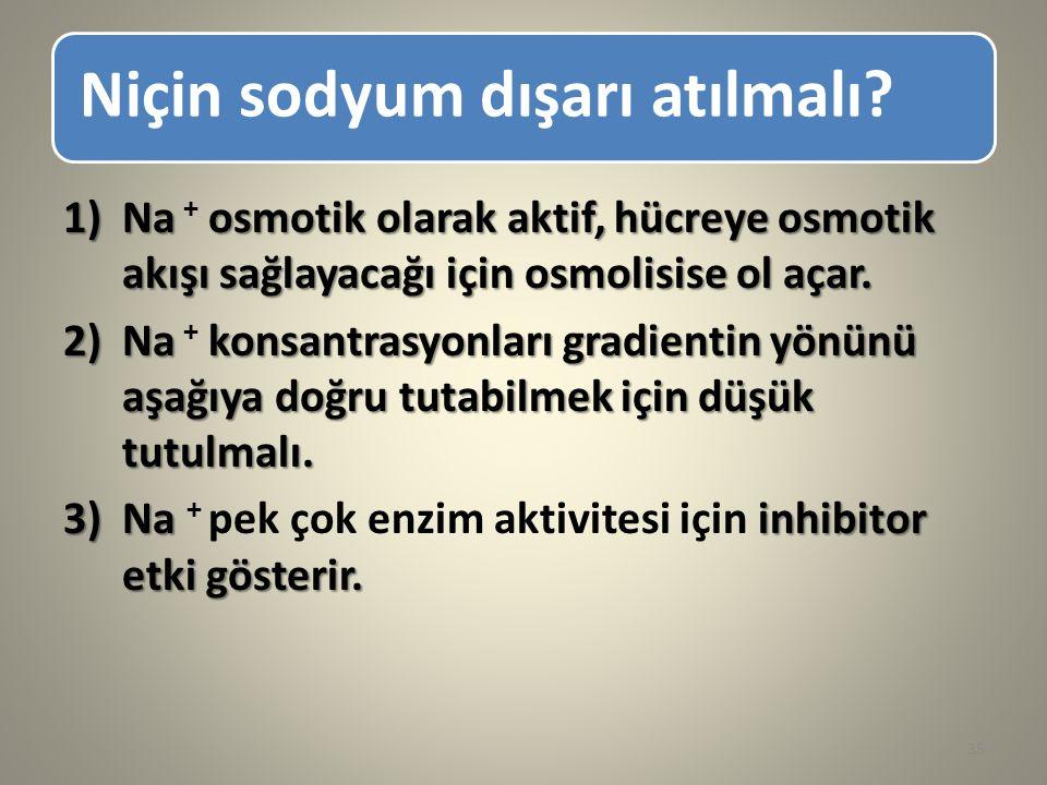 Niçin sodyum dışarı atılmalı? 1)Na osmotik olarak aktif, hücreye osmotik akışı sağlayacağı için osmolisise ol açar. 1)Na + osmotik olarak aktif, hücre