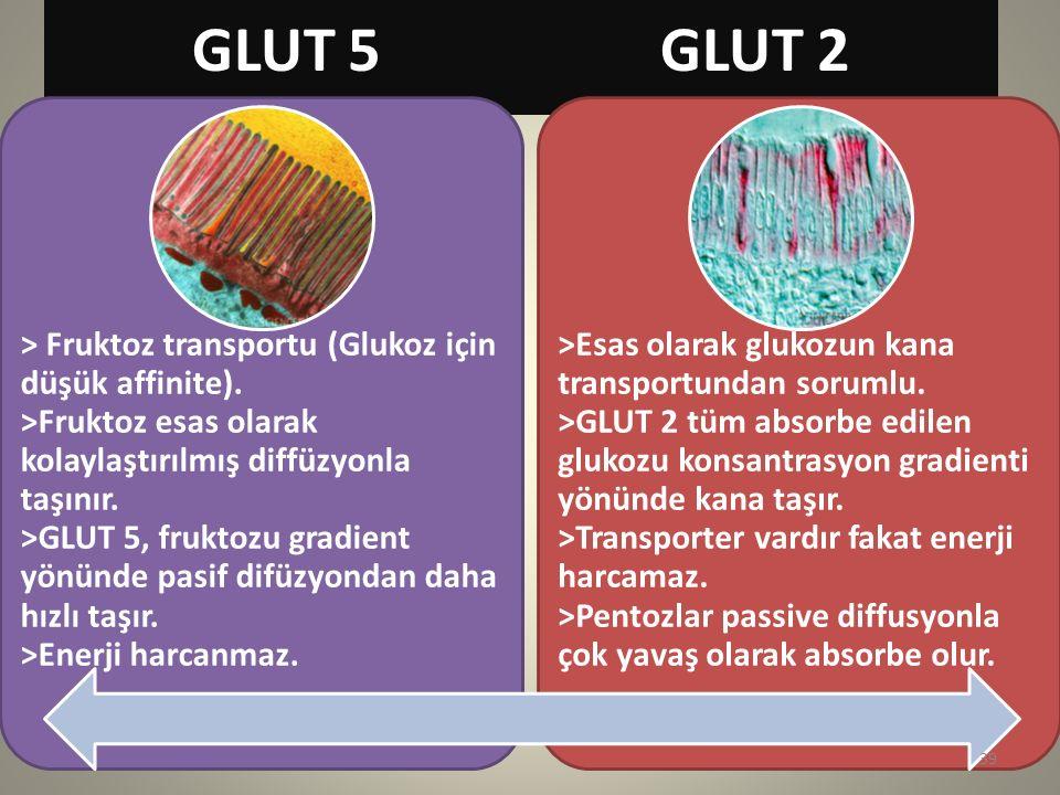GLUT 5 GLUT 2 > Fruktoz transportu (Glukoz için düşük affinite). >Fruktoz esas olarak kolaylaştırılmış diffüzyonla taşınır. >GLUT 5, fruktozu gradient