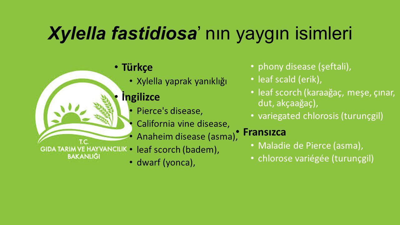 Xylella fastidiosa' nın yaygın isimleri Türkçe Xylella yaprak yanıklığı İngilizce Pierce's disease, California vine disease, Anaheim disease (asma), l