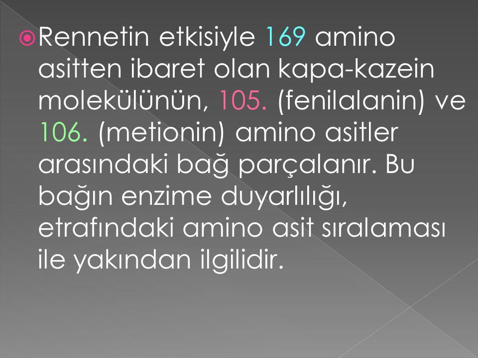  Rennetin etkisiyle 169 amino asitten ibaret olan kapa-kazein molekülünün, 105. (fenilalanin) ve 106. (metionin) amino asitler arasındaki bağ parçala