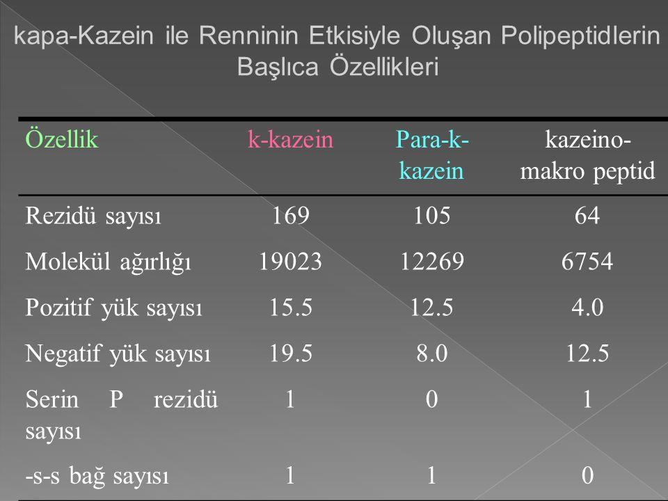 kapa-Kazein ile Renninin Etkisiyle Oluşan Polipeptidlerin Başlıca Özellikleri Özellikk-kazeinPara-k- kazein kazeino- makro peptid Rezidü sayısı16910564 Molekül ağırlığı19023122696754 Pozitif yük sayısı15.512.54.0 Negatif yük sayısı19.58.012.5 Serin P rezidü sayısı 101 -s-s bağ sayısı110