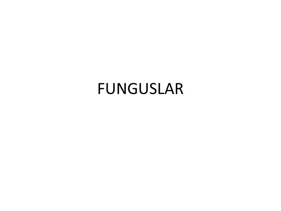 FUNGUSLAR